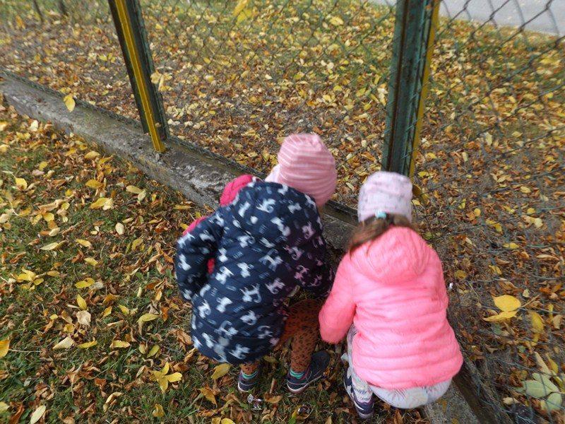 Teren posesji szkolnej. Dwie dziewczynki wybieraja śmieci przy siatce ogrodzeniowej.